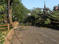 Mayor's Power Line Undergrounding Task Force